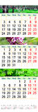 Calendario triple para abril-junio de 2017 con las imágenes naturales Imagen de archivo libre de regalías