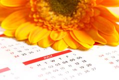 Calender. Beautiful shot of calender with flower royalty free stock photography