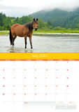 Calendrier 2014. Cheval. Juillet Photographie stock