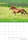 Calendrier 2014. Cheval. Mai Photographie stock