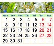 Calendrier pour mai 2017 avec le cerisier de floraison Photo libre de droits