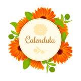 Calendula Цветки с листьями круглый значок с текстом Стоковое Изображение