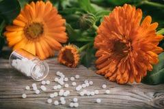 Natural medicine. Fresh blooming calendula, pot marigold and white pills on a wooden table. Calendula alternative medicine. Fresh blooming calendula, pot Royalty Free Stock Photos