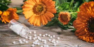 Natural medicine. Fresh blooming calendula, pot marigold and white pills on a wooden table. Calendula alternative medicine. Fresh blooming calendula, pot Stock Photography