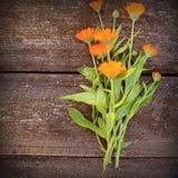 Calendula alternative medicine. Fresh blooming calendula, pot marigold on a wooden table.  Royalty Free Stock Image