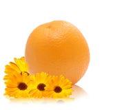 Calendula anaranjado, amarillo Imagen de archivo libre de regalías