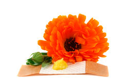 Calendula balm and a plaster Stock Image