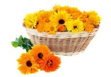 Calendula in a basket Stock Photo