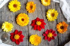 Calendula-Blumen Lizenzfreie Stockfotos