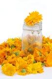 Calendula-Blumen stockbilder