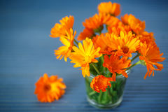 Calendula. Bouquet of blooming calendula flowers on the table Royalty Free Stock Image