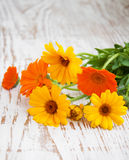 Calendula bouquet Stock Photo