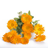 Calendula bouquet Royalty Free Stock Image