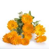Calendula bouquet Royalty Free Stock Image