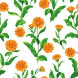 Calendula bunches pattern Stock Photo