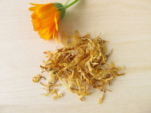 Calendula, Calendulae flos Royalty Free Stock Photography