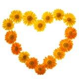 Calendula in der Liebes-Form Stockbilder