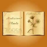 Calendula Ejemplo botánico Plantas médicas Libro abierto de Old del herborista del libro Foto de archivo