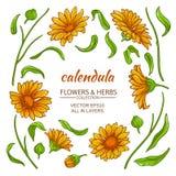Calendula elements  vector set Royalty Free Stock Photos