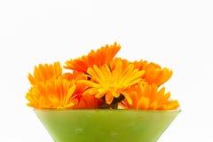 Calendula en florero Imagenes de archivo