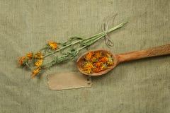 Calendula Erbe secche Medicina di erbe, fitoterapia medicinale Fotografia Stock Libera da Diritti