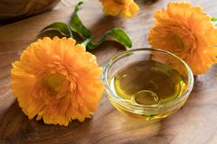Calendula essential oil in a glass bowl with calendula flowers Stock Photos