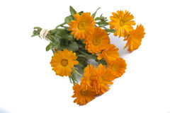 Calendula flower bouquet Stock Photos
