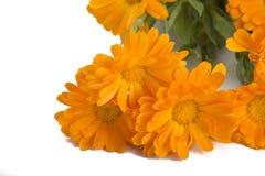 Calendula flower bouquet Royalty Free Stock Image