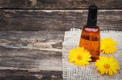 Calendula flower essential oil. Naturopathy. Herbal medicine royalty free stock photos