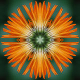 Calendula flower mandala Royalty Free Stock Photos