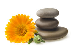 Calendula flower and pebbles Royalty Free Stock Photography