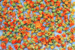 Calendula flowers background Stock Photos