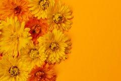 Calendula flowers background Stock Photo