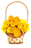 Calendula flowers in the basket Stock Image