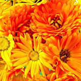 Calendula flowers bouquet Royalty Free Stock Photography