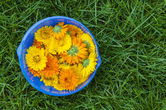 Calendula flowers in a bowl Stock Images