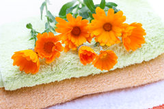 Calendula Flowers (Calendula Officinalis) Royalty Free Stock Photos