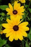 Calendula flowers among green Stock Images