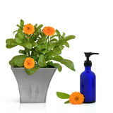 Calendula Flowers and Hand Cream Stock Photos