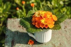 Calendula flowers Stock Images