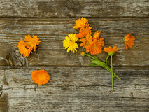 Calendula flowers on the old wooden background royalty free stock photography
