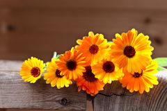 Calendula. Flowers on a old wooden table Stock Photography