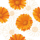 Calendula flowers pattern Royalty Free Stock Image