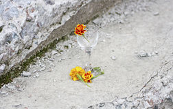 Calendula flowers among the stones. Stock Photos