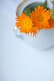 Calendula flowers in vase Stock Photography