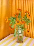 Yellow Calendula flowers verandah Italy Stock Image