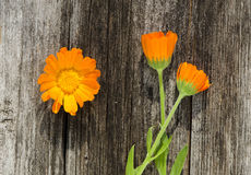 Calendula flowers on wooden background Stock Photography