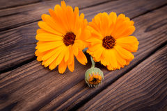 Calendula. flowers  Stock Photo