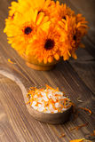 Calendula homeopathic. Royalty Free Stock Photo