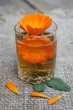Calendula kwiat w filiżance zdjęcie royalty free
